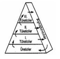 Besin Piramidi Ekoloji ve Besin Zinciri Çıkmış Sorular ve Çözümleri